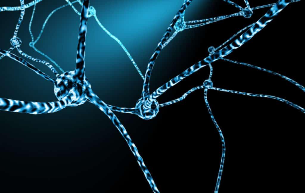 Nervenzellen und neuronales Netzwerk