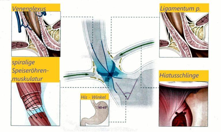 Verschlussmechanismen der unteren Speiseröhre